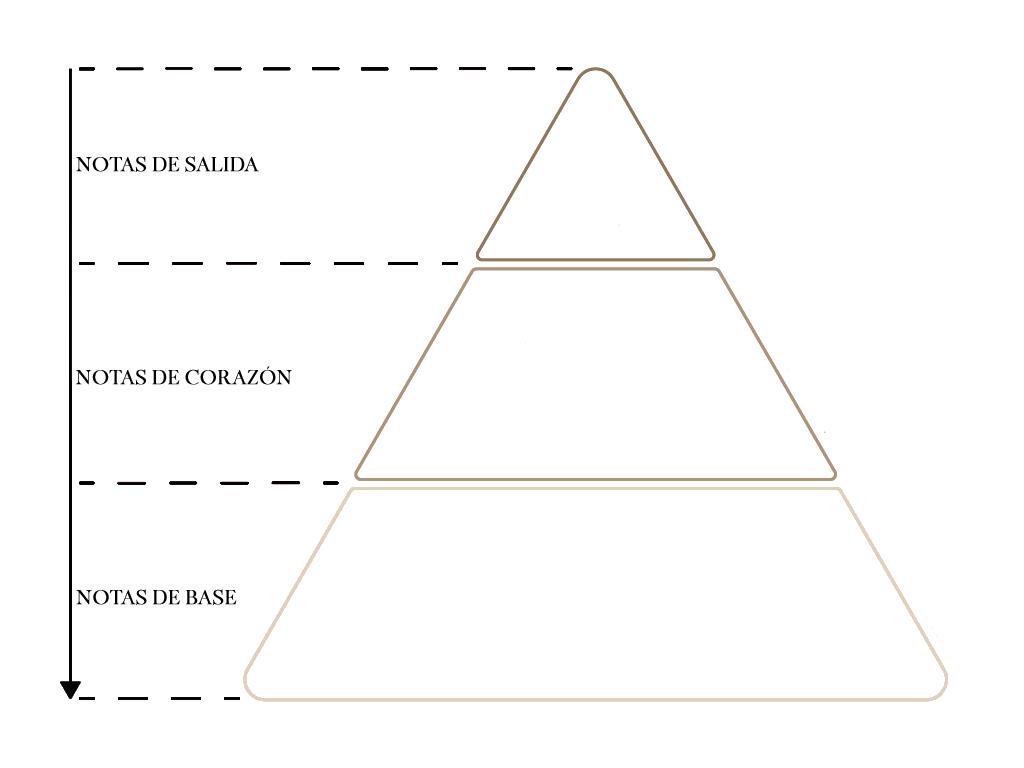 piramide olfativa perfumes nicho